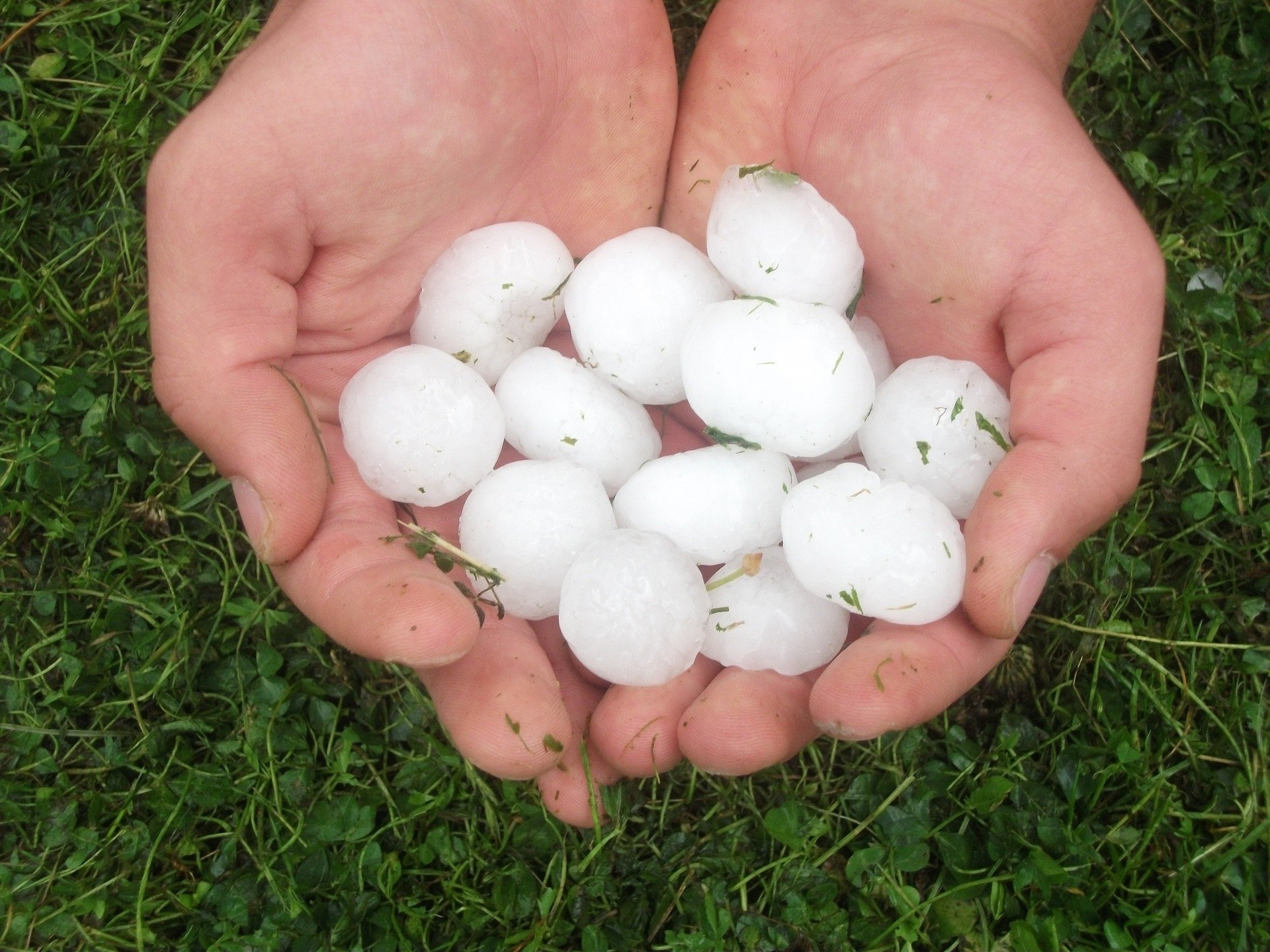 Pile of quarter-size hail stones in a persons hands